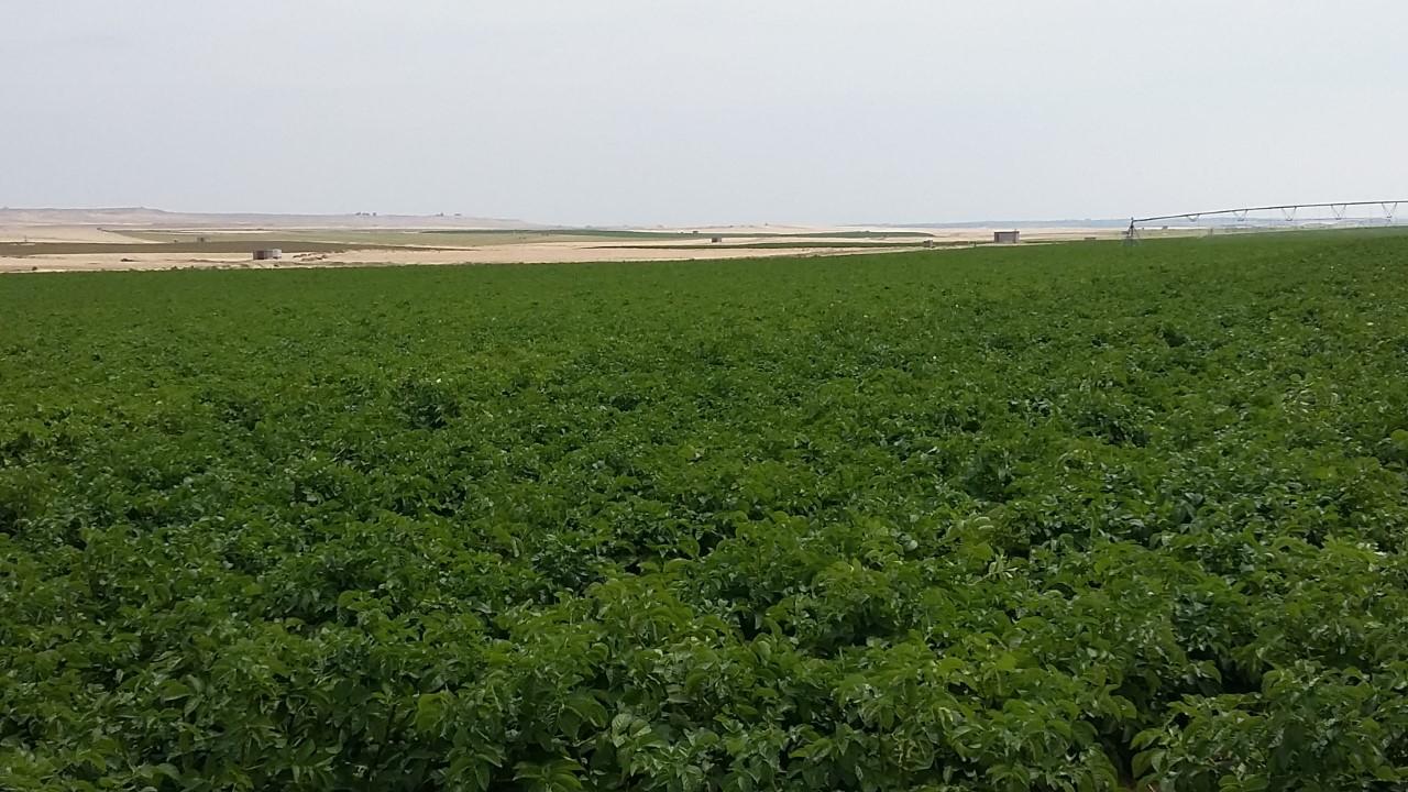 Import Aardappelveld Israel