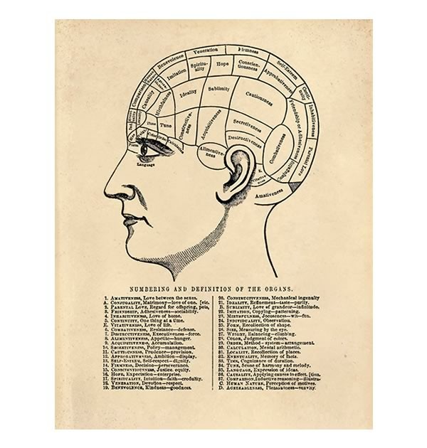 vintage diagram mgb wiring phrenology chart handmade loves reproduction poster