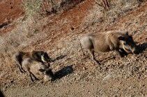 KrugerPark 115