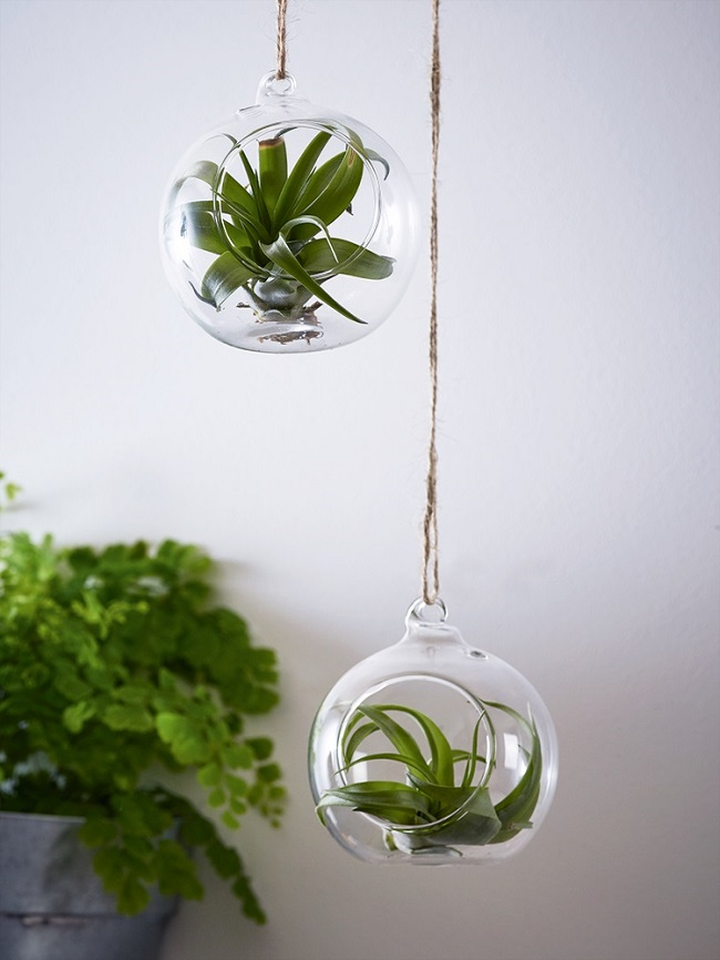 Inside Hanging Plant Holders