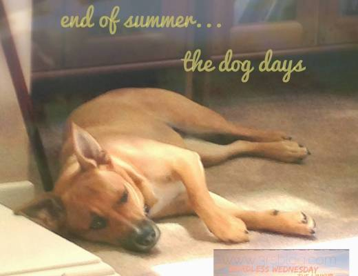 Wordless Wednesday: End of Summer