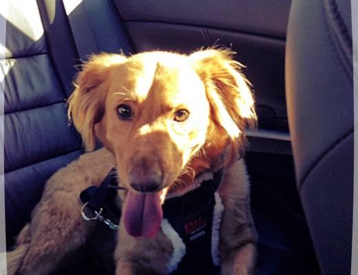 Sunday Salon: We Interrupt This Blog to Introduce A Dog