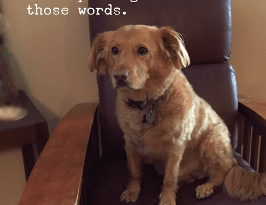 A Dog's Life: Words from Winchester, Vol. 2
