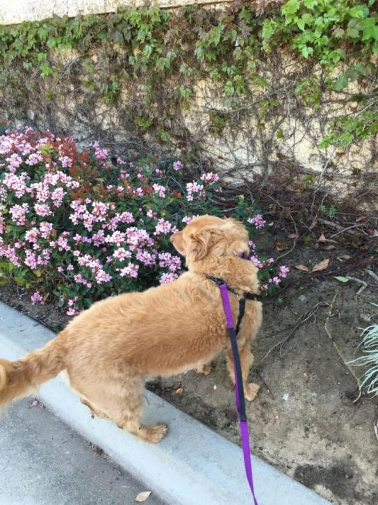 dog in the flowers spring sunday