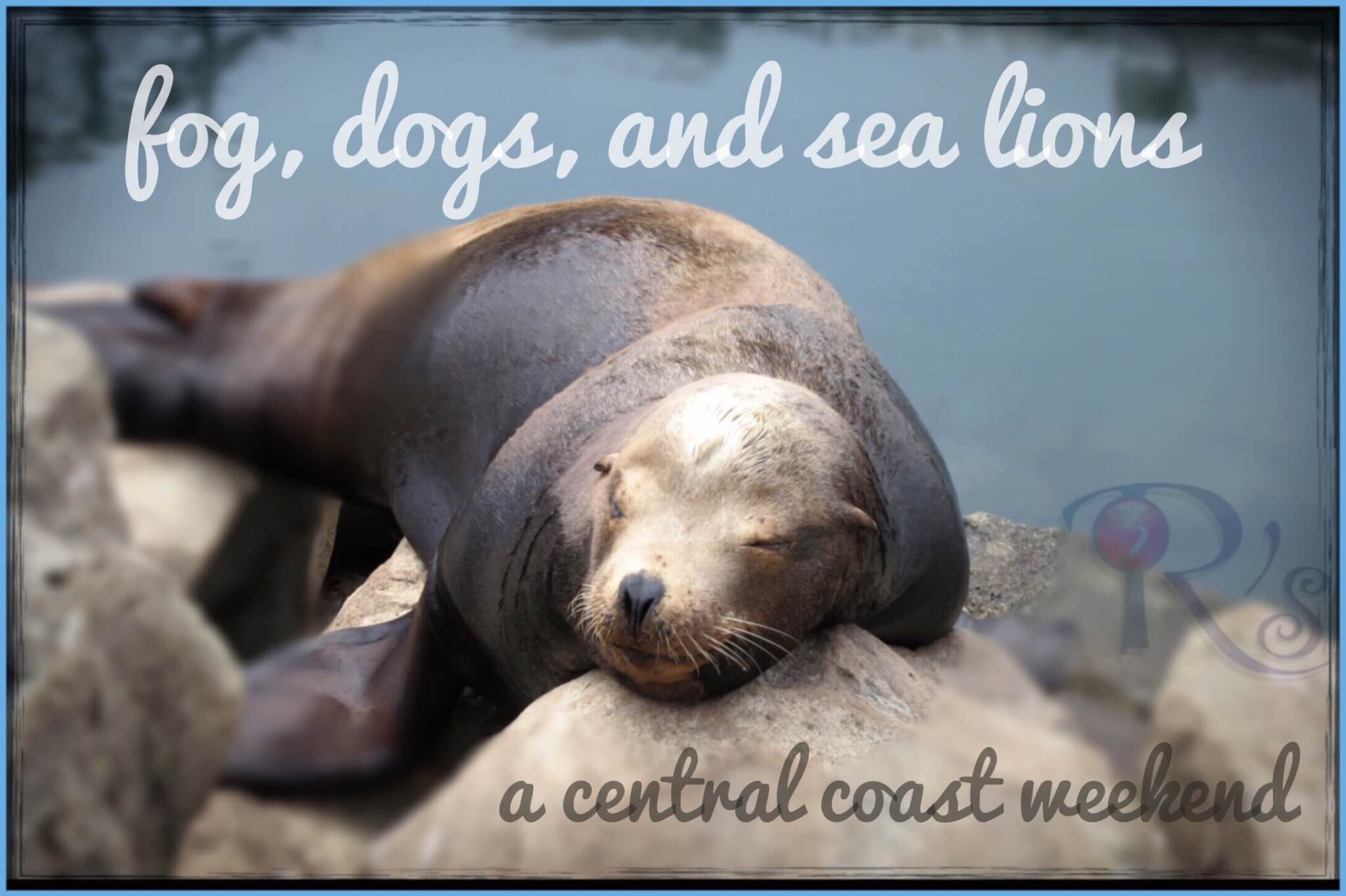 fog dogs and sea lions central coast weekend