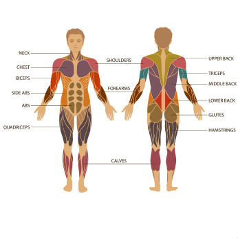 How Are Universal Frequencies Affecting You this Week (April 24-30, 2016)? HumanAnatomy-man-346x346