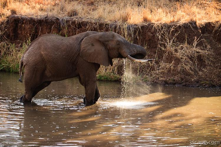 Elephant drinking water Photograph  Fine Art Prints by