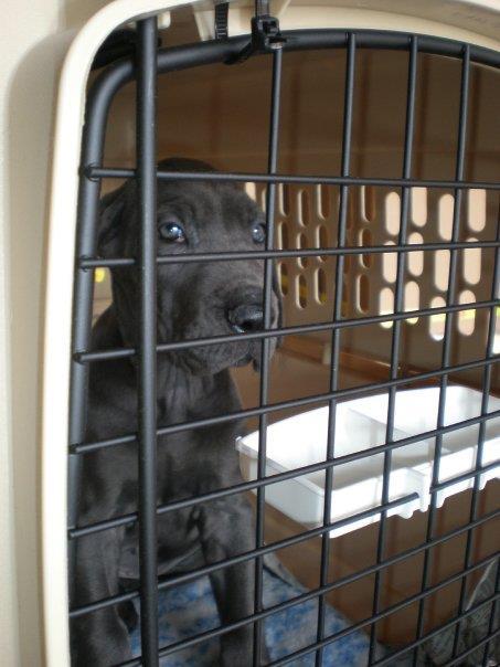 National Puppy Day: 3ten.ca