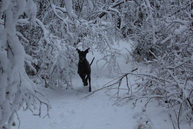 First Snow: 3ten.ca