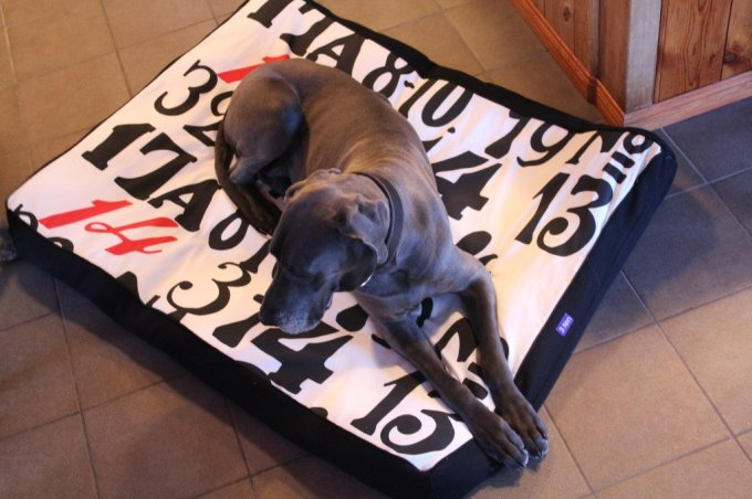 Dog Bed: 3ten.ca #dog #sewing #homedecor