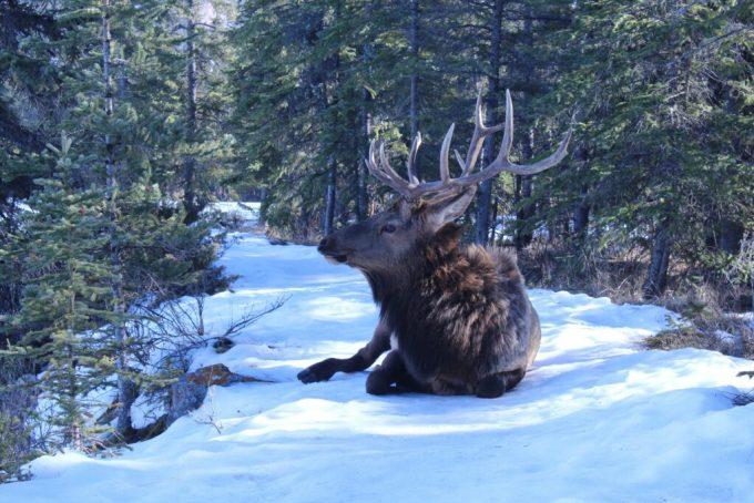 Jasper Park Lodge: 3ten.ca