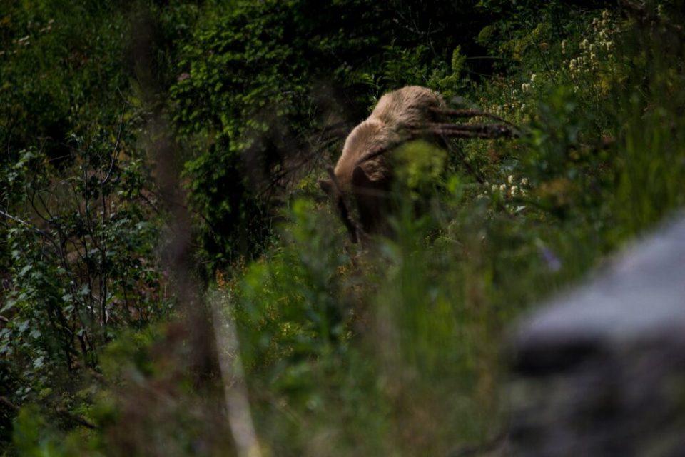 Bear: 3ten.ca