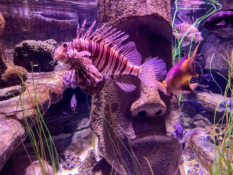 Lion Fish: 3ten.ca