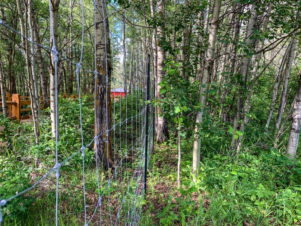 Deer Fence: 3ten.ca