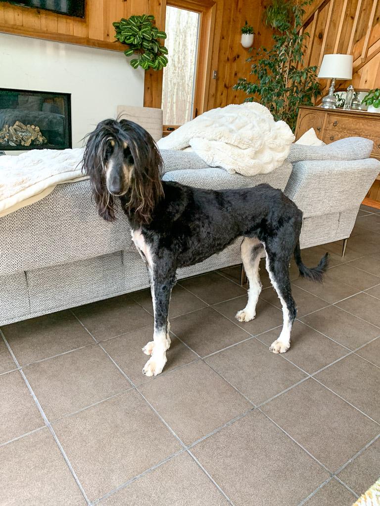 Daphne Gets a Haircut: 3ten.ca
