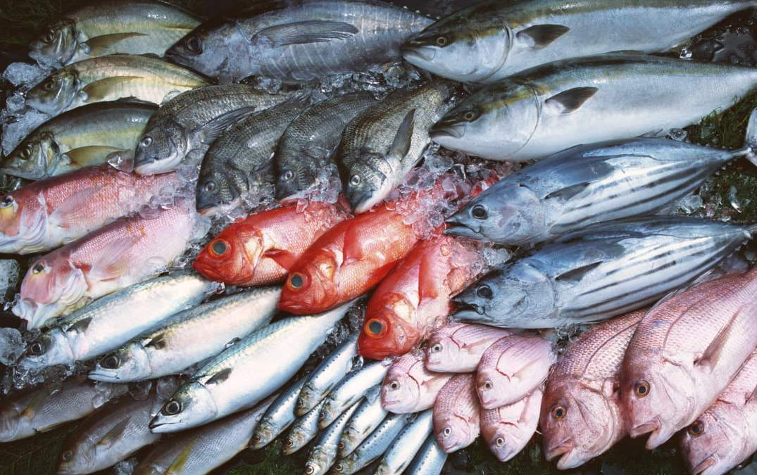Tips for Storing Fish