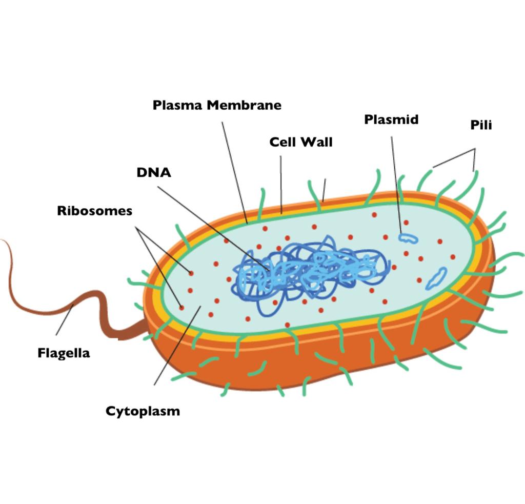 cell membrane diagram blank yamaha g14 gas wiring 83066 softblog