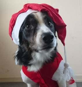 3vallares Julkalender -för dig som vill få enkla aktiveringstips!
