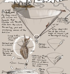 naturalist s notebook how an ant lion pit works [ 1800 x 2329 Pixel ]