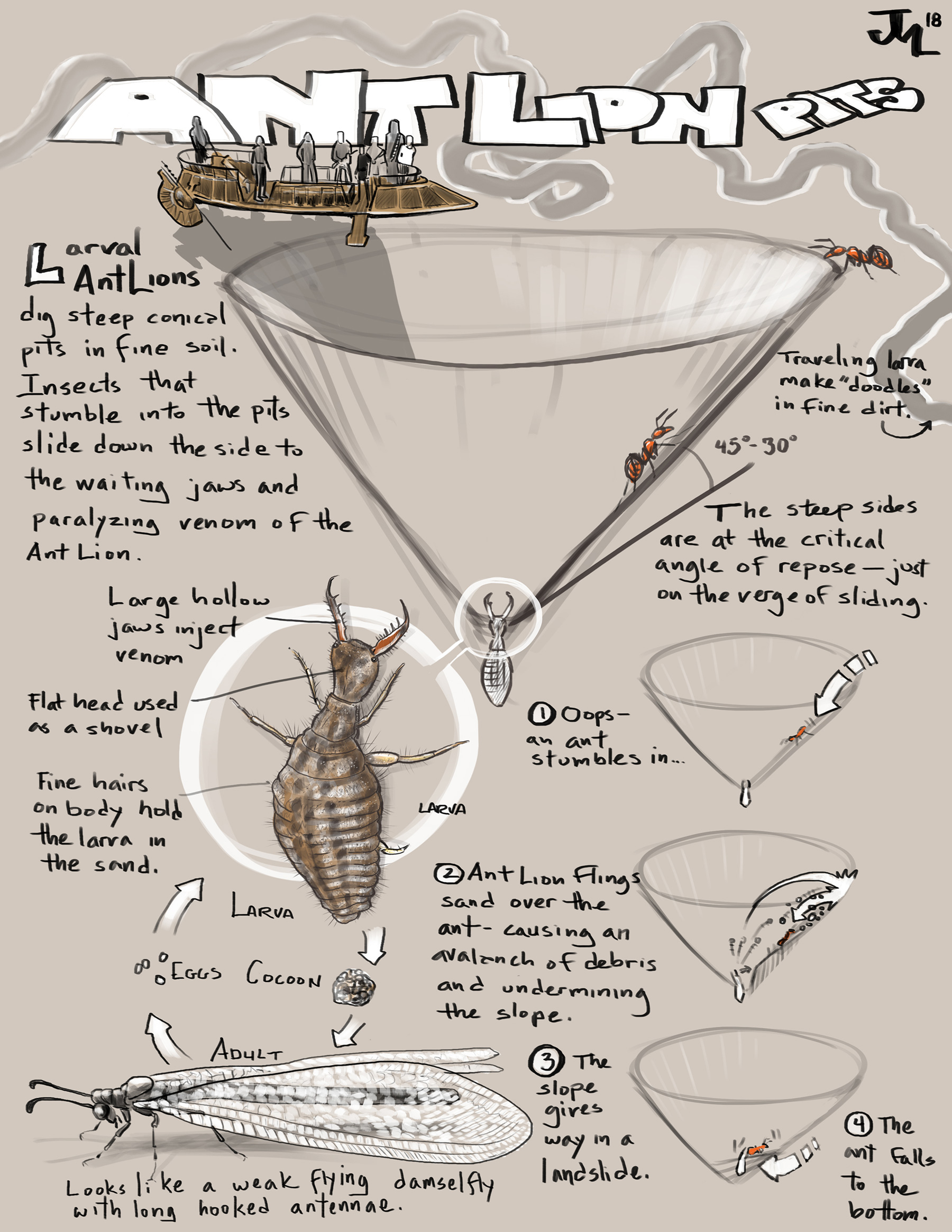 hight resolution of naturalist s notebook how an ant lion pit works