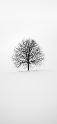 background iphone tree pro max wallpapers 3wallpapers ios recommended colors