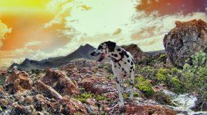 South Africa stellenbosch Trail run table mountain