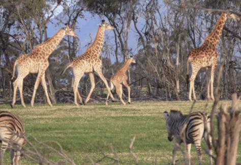 Safari Stellenbosch