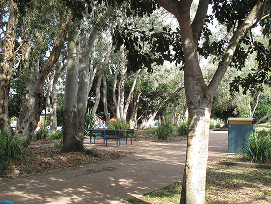 One of the pleasant picnic spots along the Esplanade in Hervey Bay