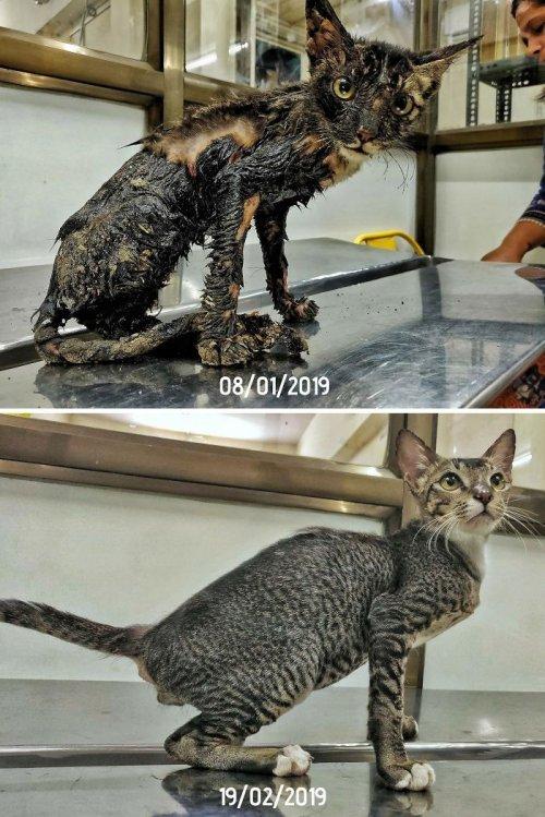 Как выглядят кошки до того как их нашли на улице и после
