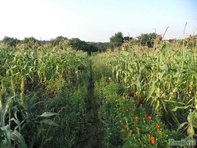 Органическое земледелие с нуля
