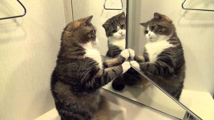 Почему кошки не смотрят в зеркало