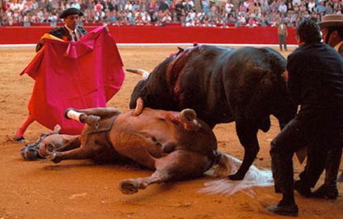 TORTURA DE CAVALO E TOURO.jpg