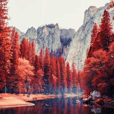 New VSCO filters digitally recreate the signature look of infrared photography