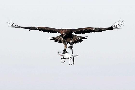 Eagle vs Drone!: Drone Photography Talk Forum Forum