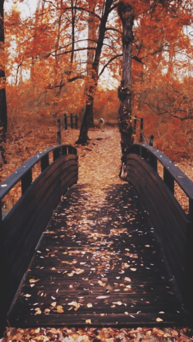 New Latest Quotes Wallpaper Fall Autumn Fox Foxes Leaves Autumn Wallpaper Fall