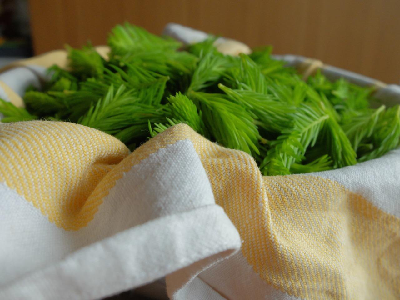 mangia minga - Maiwipfelsirup