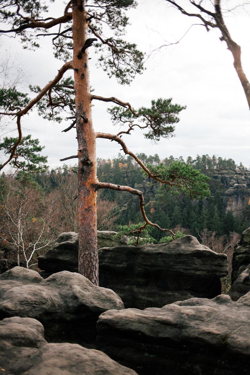 A few months ago we did a hiking trip through the Saxon Switzerland.