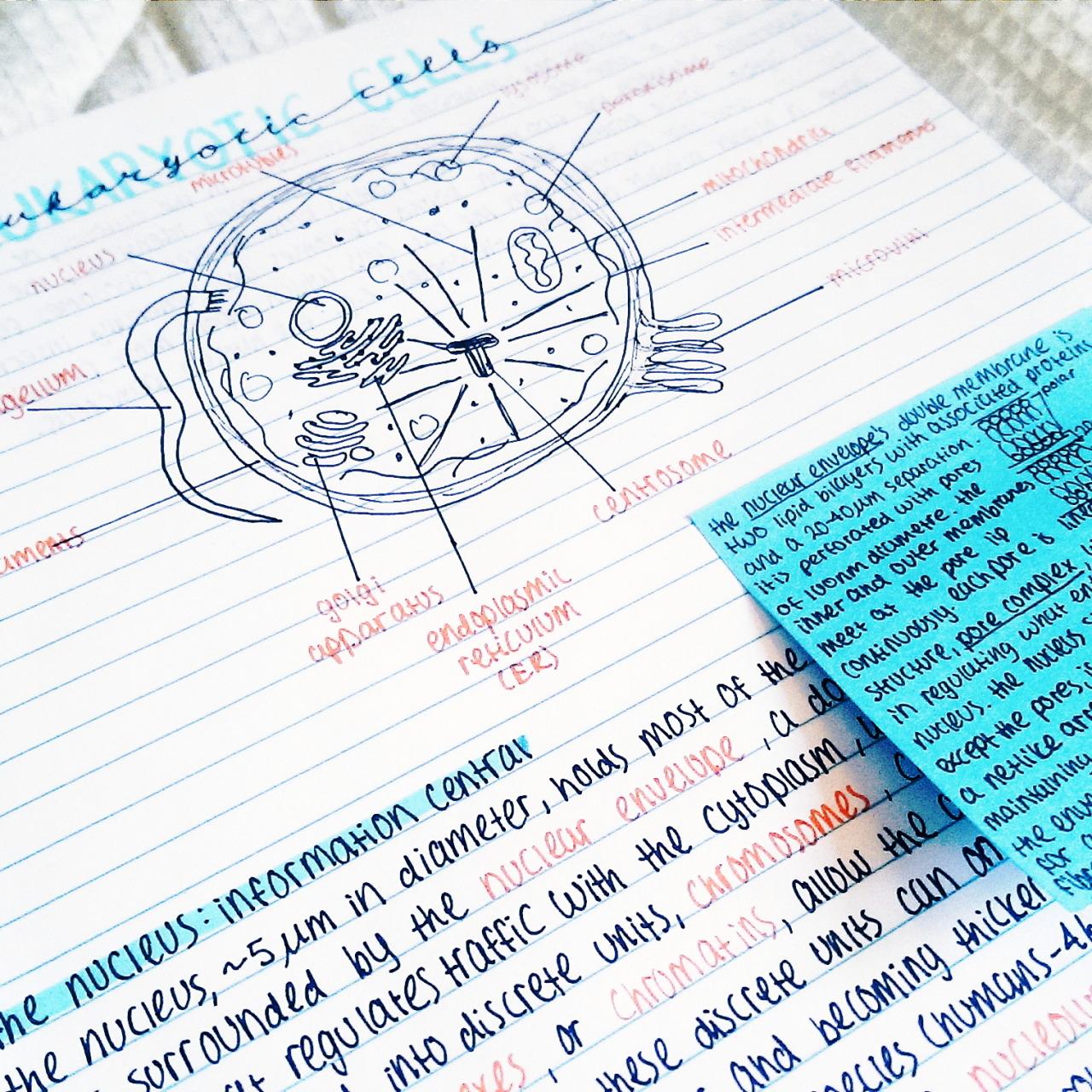 high school shot put diagram four way light switch orange college blue study notes handwriting