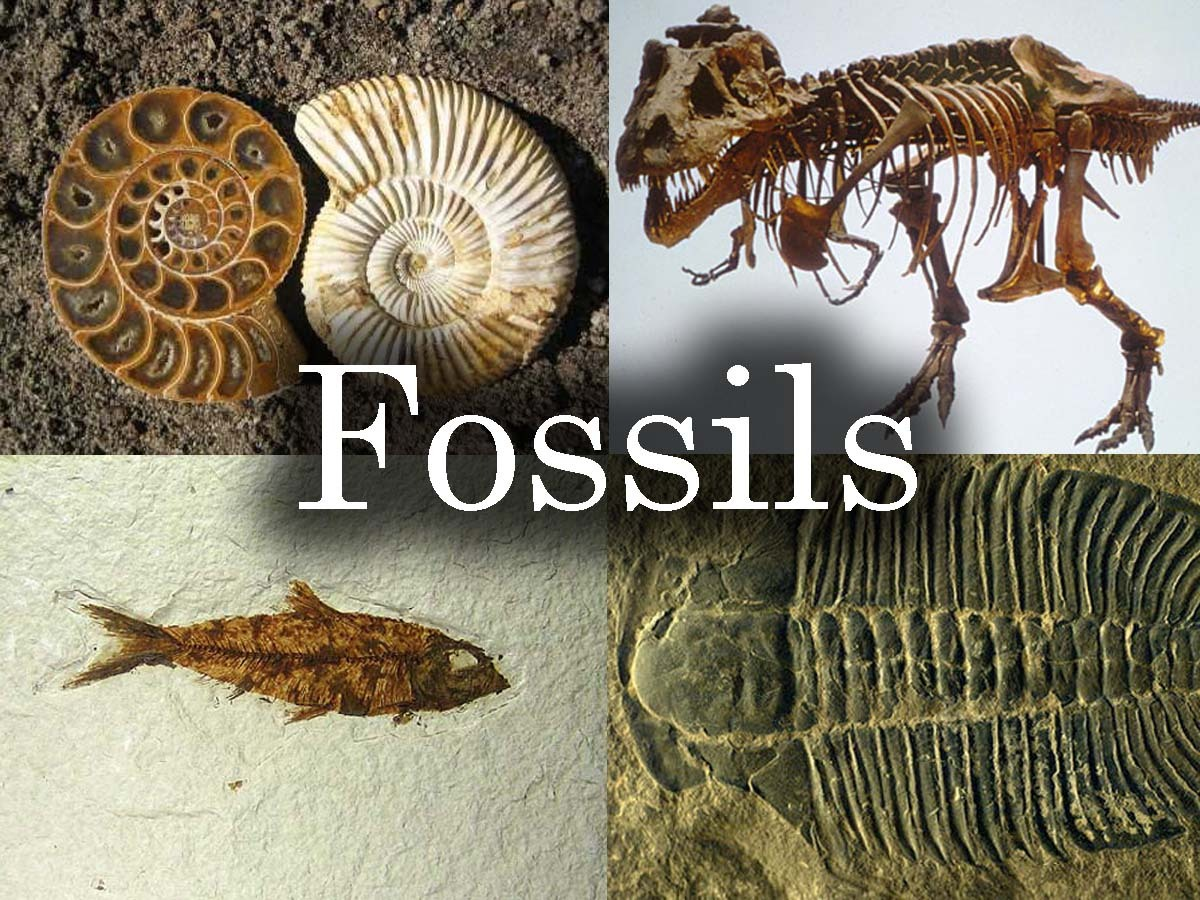 A Fossil Is A Preserved Remain Of A Once Living