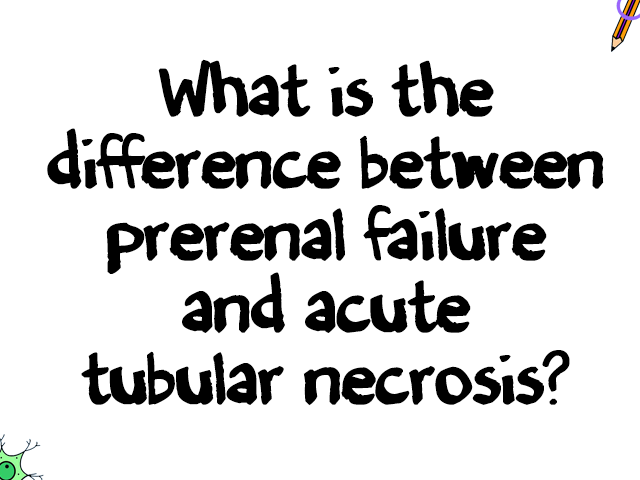 medicowesome: What is prerenal failure? Prerenal