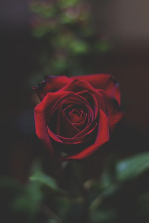 1k love flower 2k