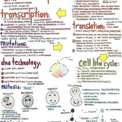 Venn Diagram Dna And Rna Bee R Rev Limiter Type H Wiring My Notes For Usmle — Oh-soufflegirl: Hey Everyone! Here (x) Is My...