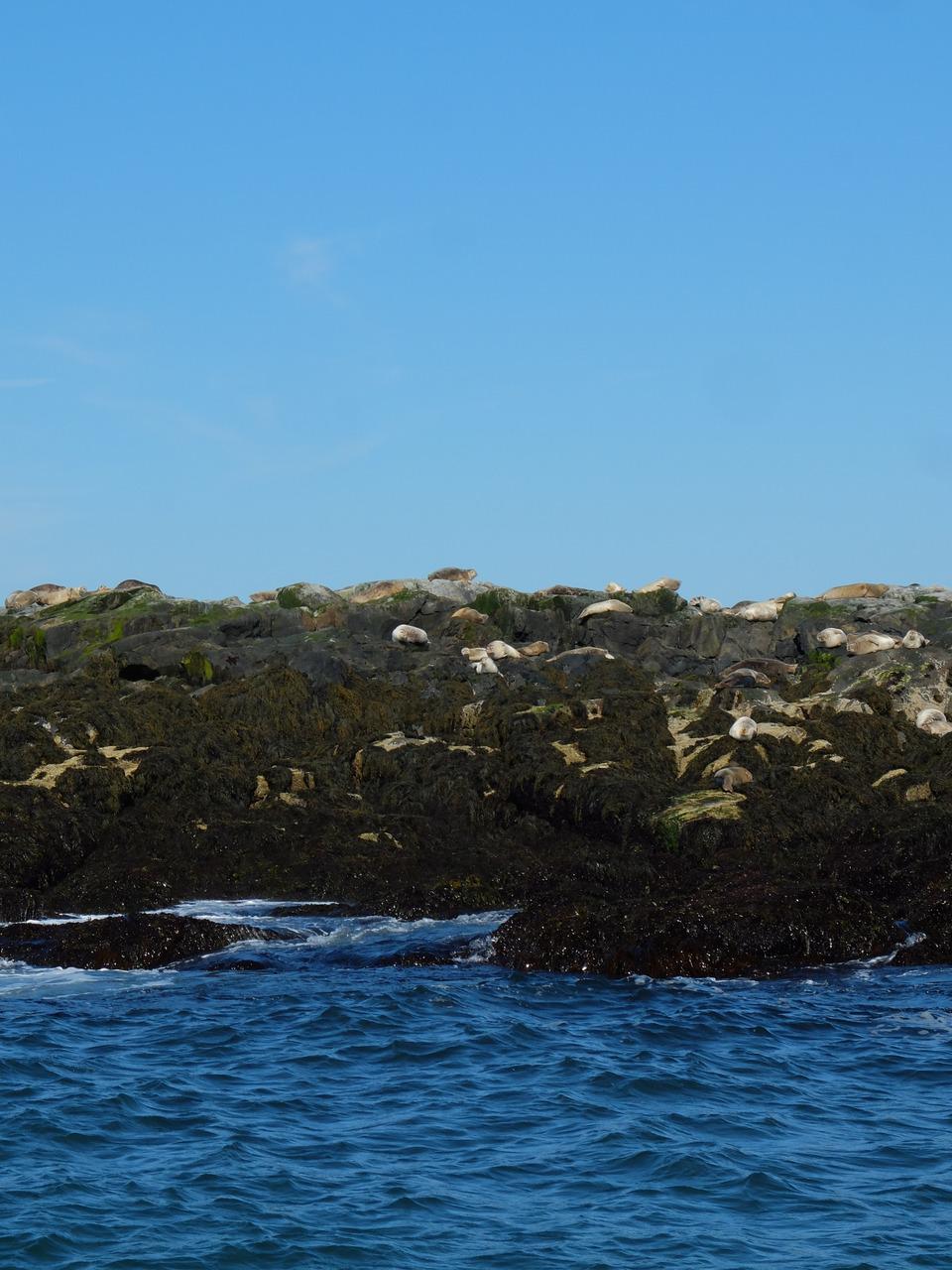 mangia minga // Travels: Grand Manan, New Brunswick. North Rock near Machias Seal Island