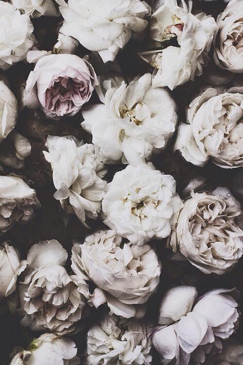 pretty vintage flowers dead