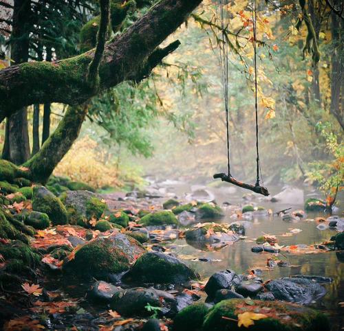photography landscape trees nature Magic scenery autumn