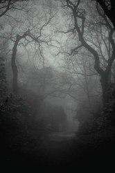 Black and White Magic forest fantasy castle mist fairy tale grey fog fairytale magical pale foggy •