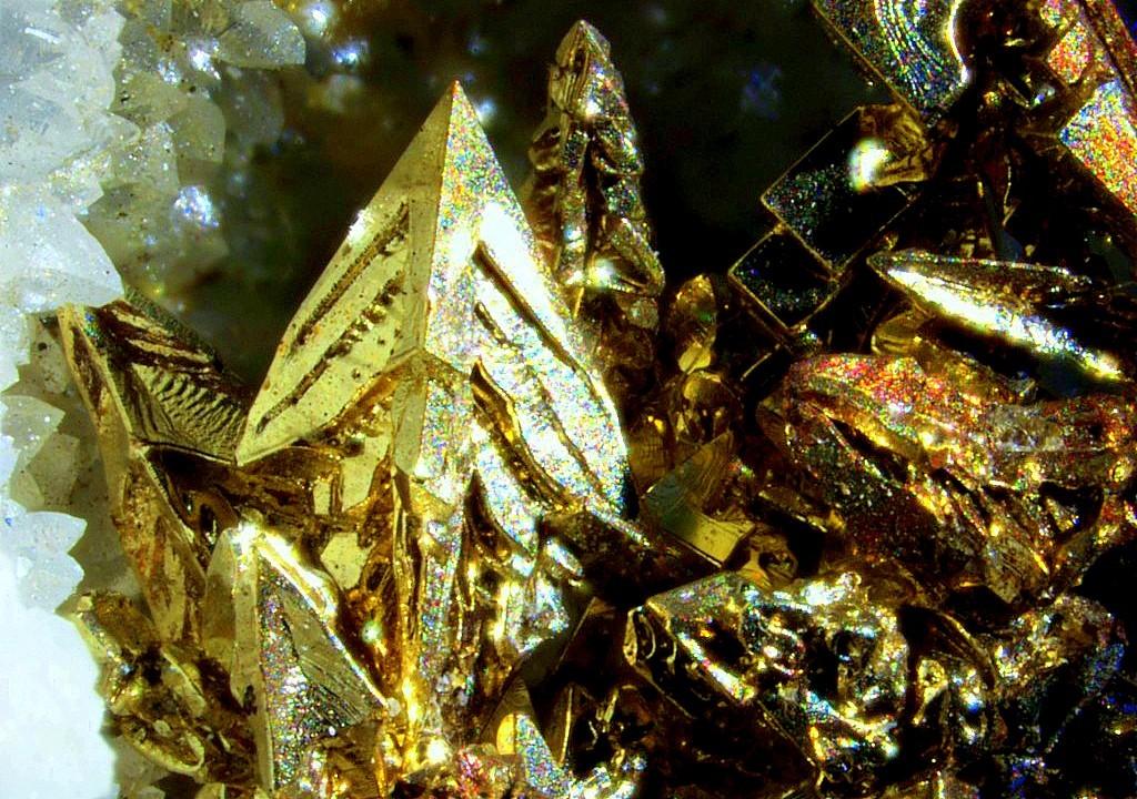 Gold,Quartz | Locality:Roşia Montană (Verespatak; Vöröspatak; Goldbach), Alba Co., Romania | Cluster of sharp gold crystals of different habit including cubes, modified octahedra and spinel twins on quartz. John Rakovan photo.