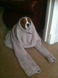 dog wear | Tumblr