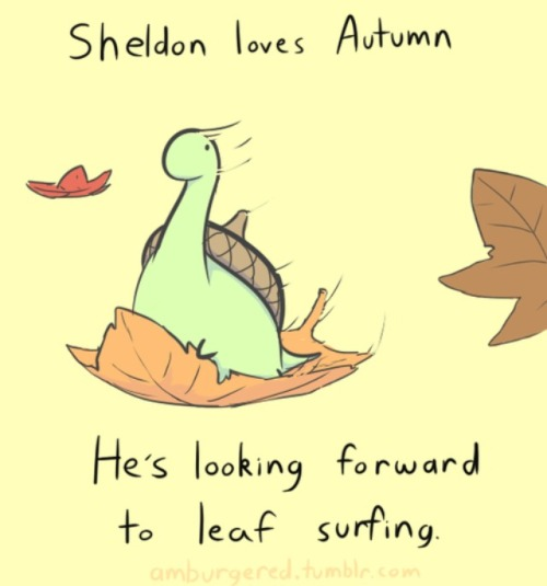 Pusheen Fall Wallpaper Sheldon The Turtle Tumblr