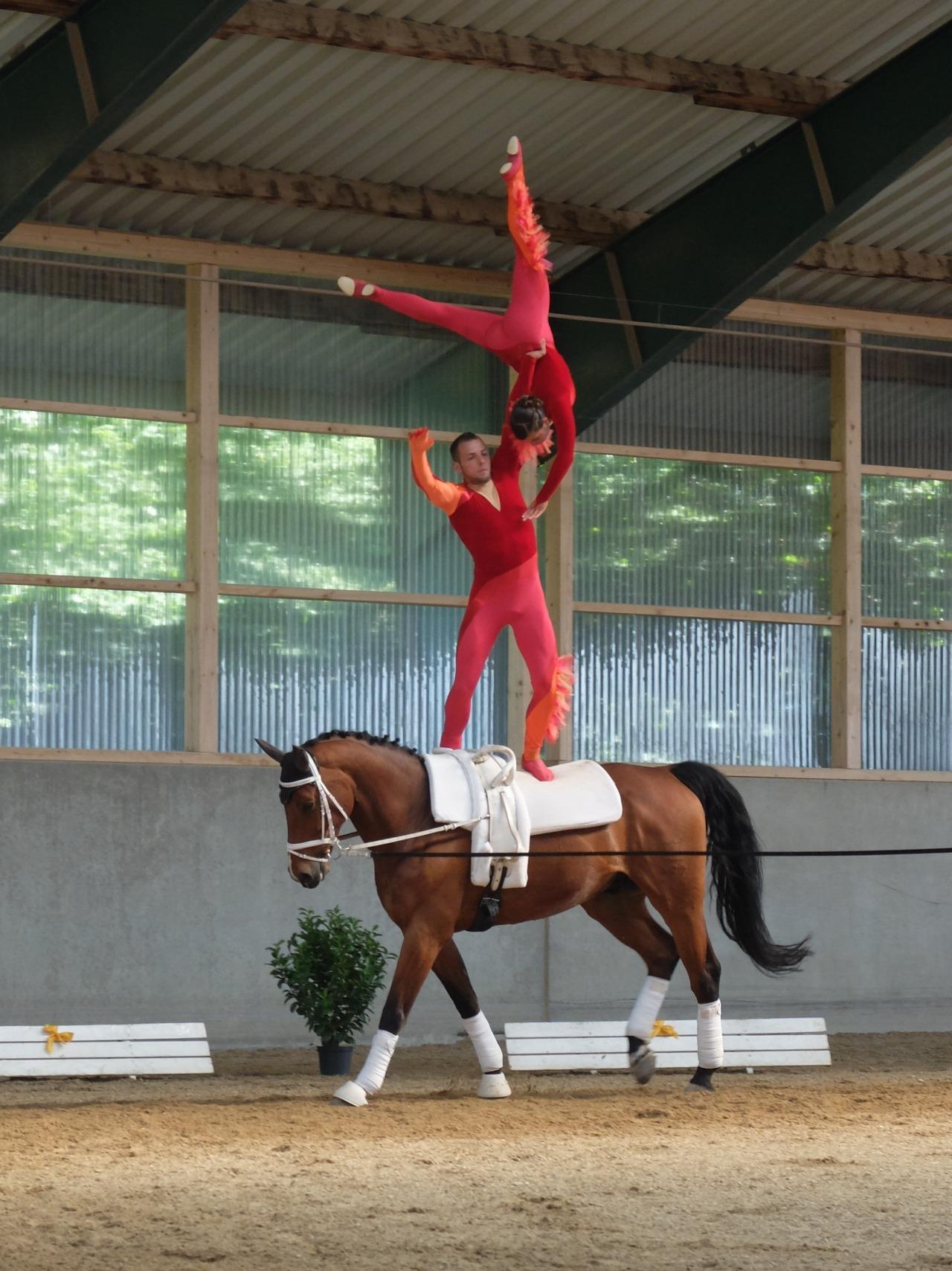 mangia minga - gymnastics on horseback, team VV Ingelsberg 1